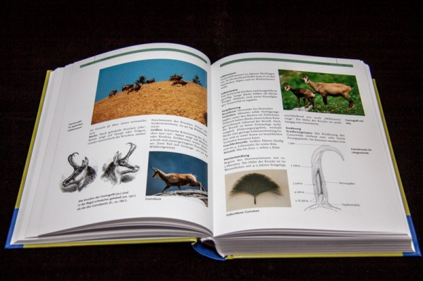 Jagdbuch10