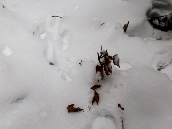 Winter2_11