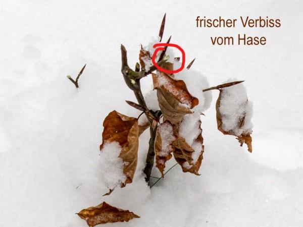 Winter2_12