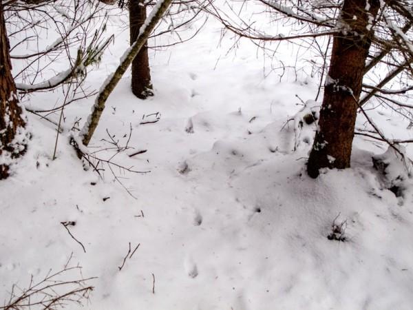 Winter2_14