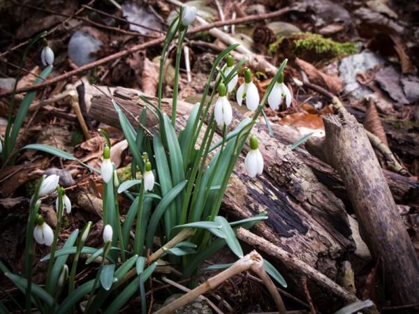 Frühling im Februar