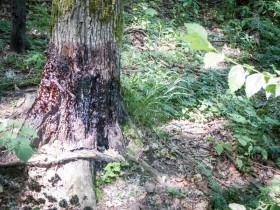 Revierarbeiten – Malbäume