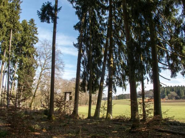 Holzfäller unterwegs