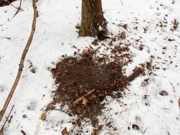 Plätzstellen im Schnee