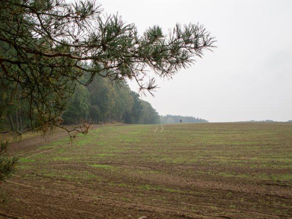 Tag 3 – Jagdausflug nach Mecklenburg-Vorpommern