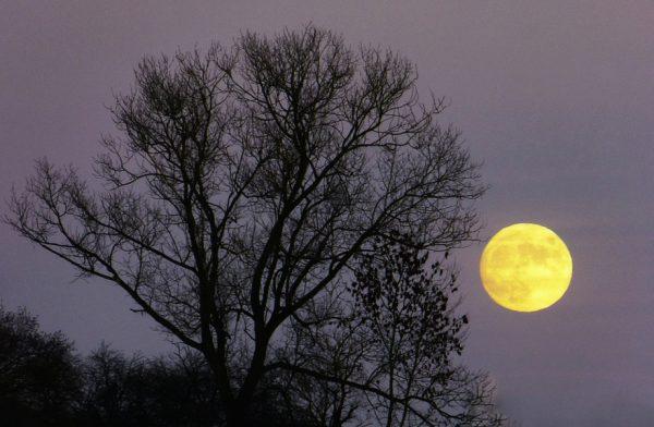 Supermond, blauer Mond und Blutmond