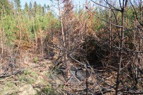 Waldbrandrisiko