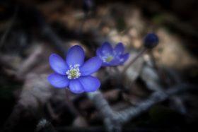 Frühling – endgültig im Revier!?!