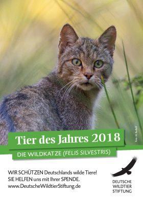 Wildtier des Jahres 2018 – Wildkatze