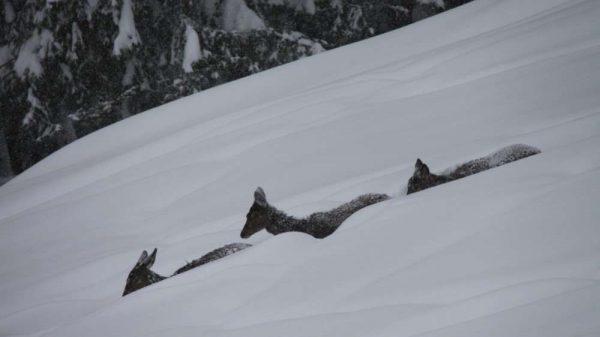 Zu viel Schnee für das Wild