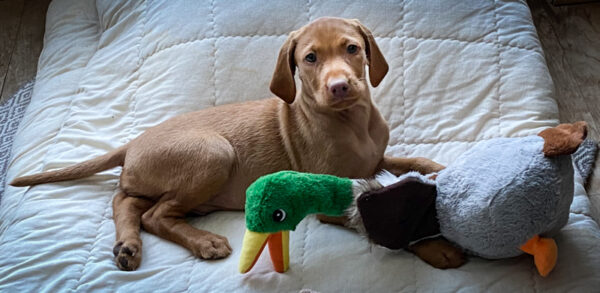 Lieblingsspielzeug Ente